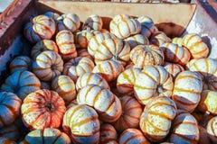 五颜六色的微型南瓜在万圣夜南瓜补丁的待售 免版税库存图片
