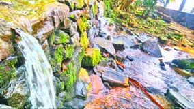 五颜六色的微型水秋天 库存照片