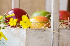 五颜六色的成熟红色黄色苹果,在葡萄酒木箱子,夏天花,在篮子的果子的梨,户外,从事园艺 免版税库存照片