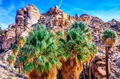 五颜六色的扇形棕榈树在约书亚树 免版税库存图片