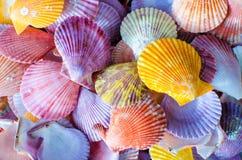 五颜六色的扇贝贝壳 免版税库存照片