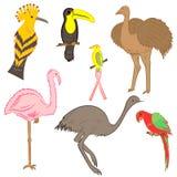 五颜六色的手拉的异乎寻常的热带鸟 鹦鹉、驼鸟、鸸、蜂鸟、戴胜和Toucan乱画图画  平的样式 图库摄影