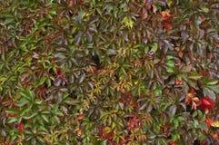 五颜六色的抽象秋天叶子挂毯 免版税库存照片
