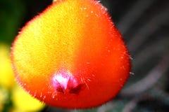 五颜六色的新鲜的新芽-春天 库存照片