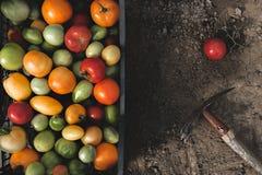 五颜六色的新鲜的蕃茄 在视图之上 图库摄影