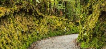 五颜六色的新鲜绿色的青苔段落在公园,地衣走道走的足迹路线在湖Matheson,南岛, NZ 免版税库存照片