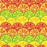 五颜六色的无缝的柑橘背景 库存图片