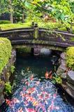 五颜六色的日本人Koi鲤鱼鱼在池塘 库存照片