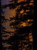 五颜六色的日落在与树剪影的水中反射了 免版税库存图片