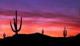 五颜六色的日落在亚利桑那的西南沙漠 库存照片