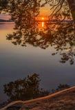 五颜六色的日落视图通过树枝 免版税库存照片