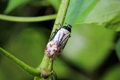 五颜六色的昆虫在绿色婆罗洲 免版税图库摄影