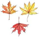 五颜六色的明亮的秋叶的水彩和墨水手拉的例证 库存图片