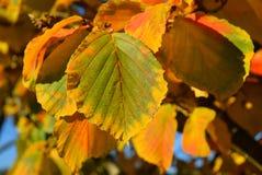 五颜六色的明亮的秋天叶子关闭  免版税库存照片