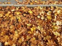 五颜六色的明亮的秋天叶子背景关闭  图库摄影