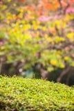 五颜六色的春天叶子 免版税图库摄影
