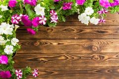 五颜六色的春天喇叭花壁角边界  图库摄影