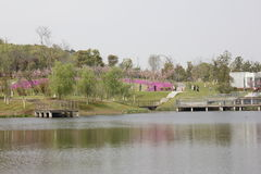 五颜六色的春天在神山庭院(芜湖,中国)里 免版税库存照片