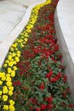 五颜六色的春天培养花床背景 库存照片