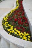 五颜六色的春天培养花床背景 库存图片