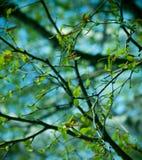 五颜六色的春天结构树 库存照片