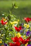五颜六色的春天花在公园 库存图片