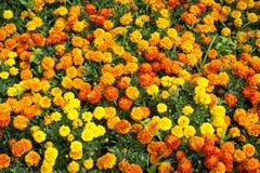 五颜六色的春天花田照片  图库摄影