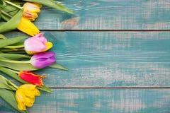 五颜六色的春天郁金香在绿色木背景开花当与自由空间的贺卡 免版税图库摄影