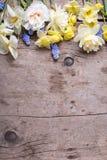 从五颜六色的春天郁金香,水仙, muscaries的边界开花 免版税库存图片