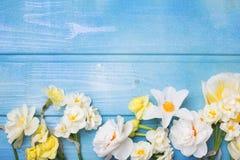 从五颜六色的春天郁金香,水仙, muscaries的边界开花 免版税图库摄影