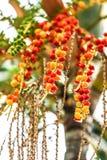 五颜六色的束与一绿色自然bokeh backgroun的槟榔树树 库存图片