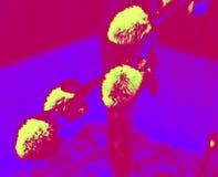 五颜六色的杨柳花 库存图片