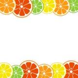 五颜六色的柑橘水果背景 柠檬,石灰,桔子,葡萄柚 ?? 皇族释放例证