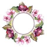 五颜六色的栀子花 花卉植物的花 框架边界装饰品正方形 免版税图库摄影