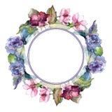 五颜六色的栀子花 花卉植物的花 框架边界装饰品正方形 库存照片
