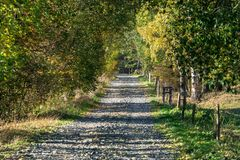 五颜六色的树和农村路在秋天森林里 免版税图库摄影