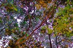 五颜六色的树和背景 免版税库存照片