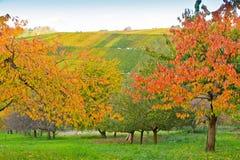 五颜六色的树和葡萄园 免版税库存照片