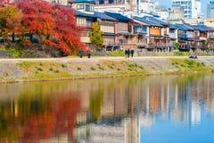 五颜六色的树在日本 免版税库存图片