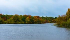 五颜六色的树在秋天排行一个湖 图库摄影
