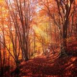 五颜六色的树在秋天森林里 库存照片