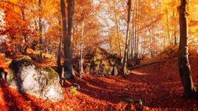 五颜六色的树在秋天森林里 库存图片