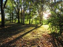 五颜六色的树在阳光下在一秋天天,落叶树 库存照片
