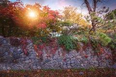 五颜六色的树在10月把秋天的改变的颜色留在pla 免版税库存照片