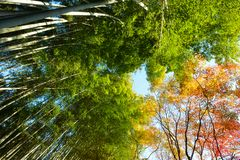 五颜六色的树季节性看法在京都,日本 库存照片