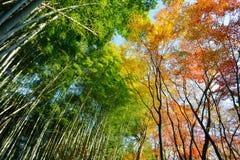 五颜六色的树季节性看法在京都,日本 免版税库存图片