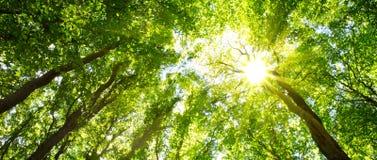 五颜六色的树梢在有虽则发光树的太阳的秋天森林里 库存图片