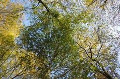 五颜六色的树梢 库存图片