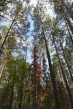五颜六色的树的看法在密集的森林里 库存图片