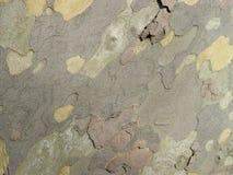 五颜六色的树纹理 库存照片